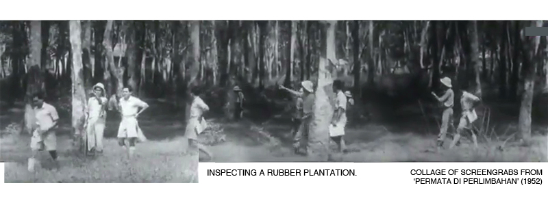 _02-Permata-Rubber-Plantation