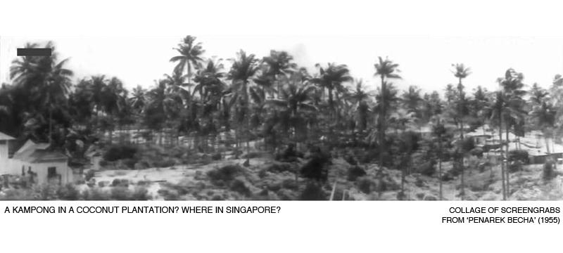 _05-PenarekBecha-Kampong-Coconut-Plantation