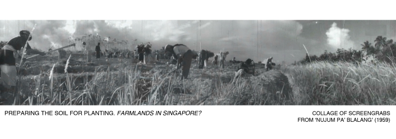 _01-Pak-Belalang-Plantation