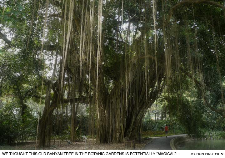 _03A_Botanic-Gardens-Banyan-Tree-2015