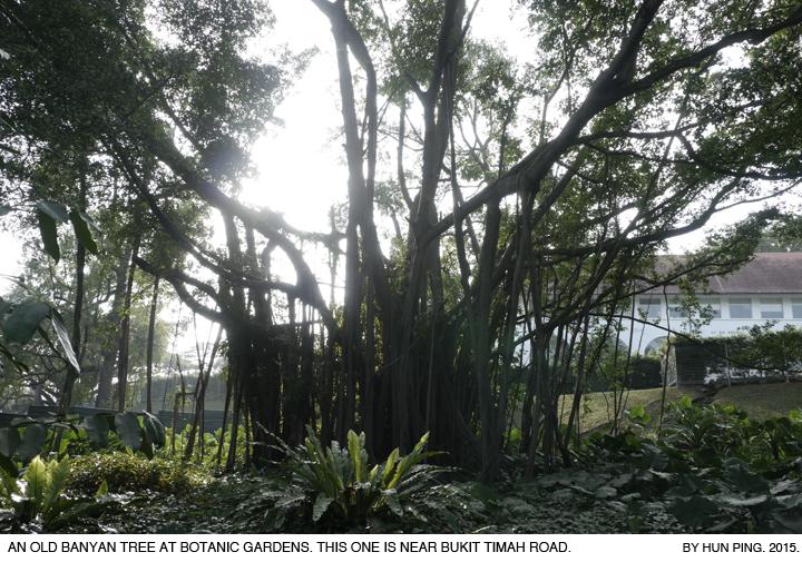 _03D_Botanic-Gardens-Banyan-Tree-2015