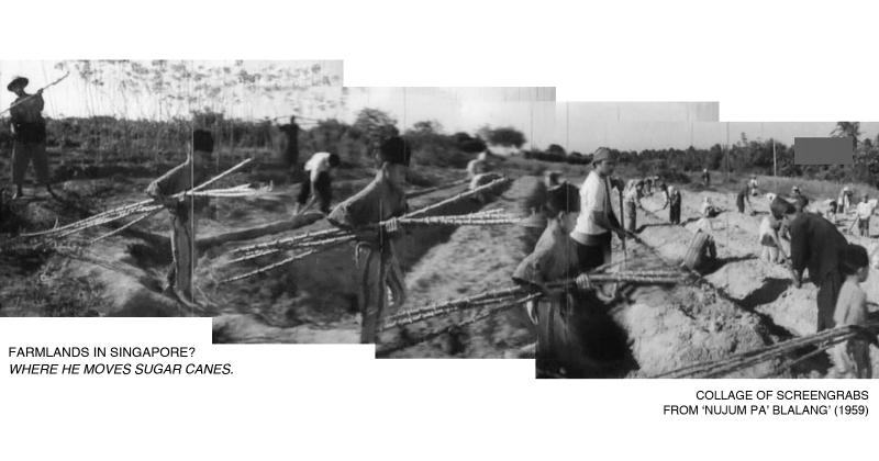 _04-Pak-Belalang-Plantation-Sugar-Cane
