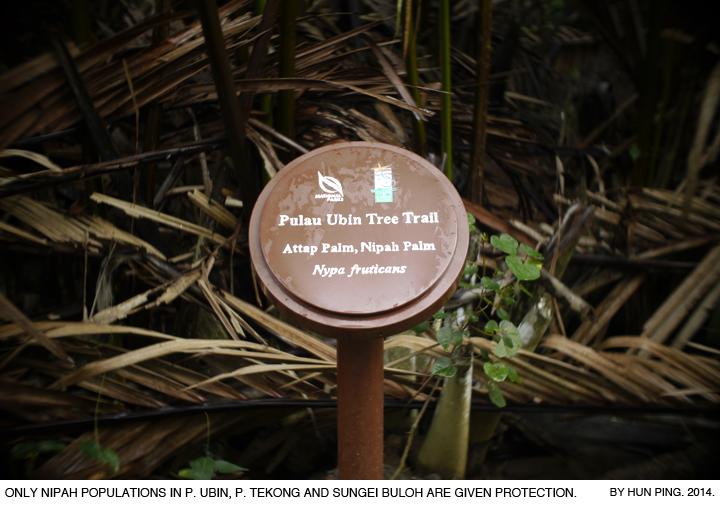 _05B-Pulau-Ubin-Nipah-Attap-Palms-2014